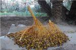 Maroc : Les amandes de Tafraout, le miel de Tadla Azilal consacrés produits du terroir