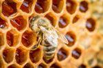 Une «Maison du miel» ouvre ses portes à Taroudant