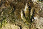 Nomad #49 : Sur les traces préhistoriques de la plage d'Anza