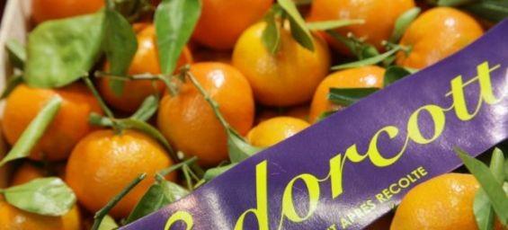 Un agriculteur espagnol remporte sa bataille contre une société associée aux Domaines Agricoles du roi