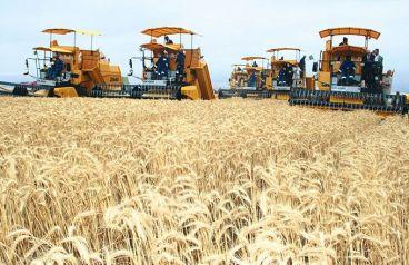 Maroc: La flambée mondiale des prix appelle à une révision des politiques agricoles