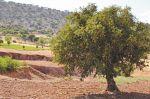 Tiznit : Opération de plantation d'arbres parallèlement à la COP25