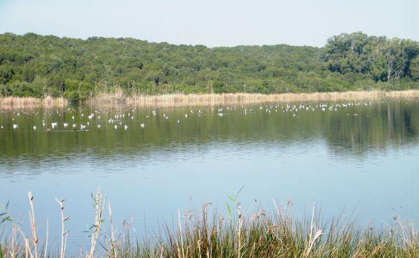 La réserve naturelle de Sidi Boughaba est située à 11 kilomètres de Kénitra, près de la plage de Mehdia. / Ph. Abdeslam Bouchafra