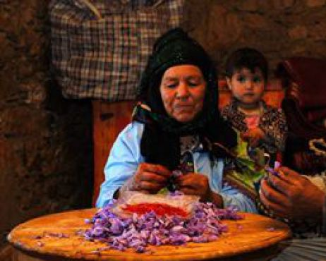 La culture et la cueillette du safran demande une patience infinies. /DRMichelTarrier