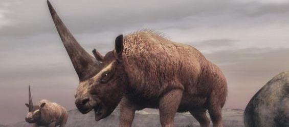 Paléontologie : Un nouveau Elasmotheriinae rhinocéros découvert au Maroc
