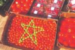 Maroc : Malgré la crise sanitaire, les exportations de primeurs ont augmenté de 8%