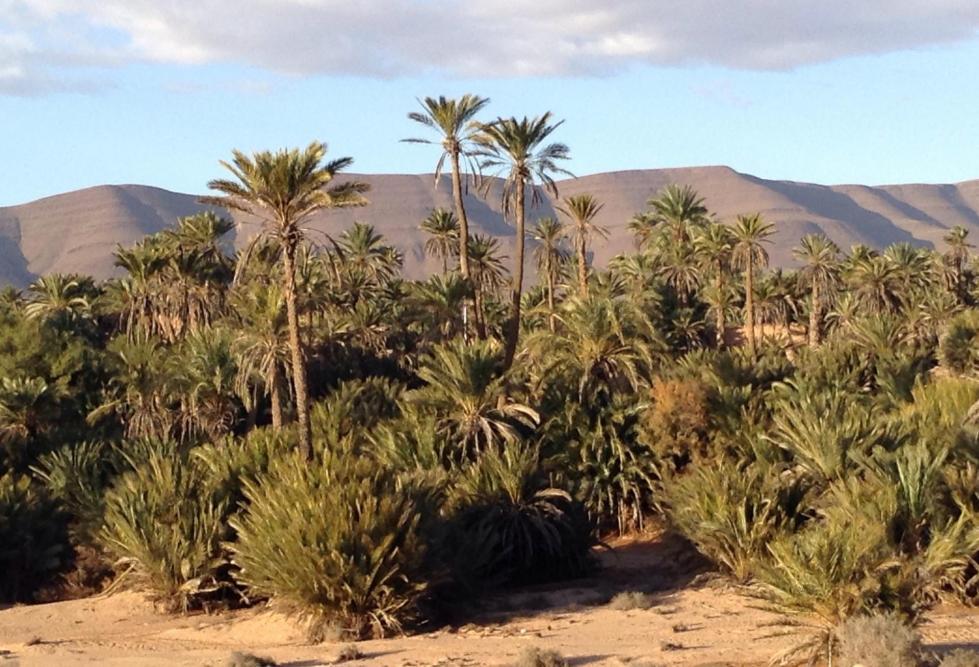 premier site rencontres maroc