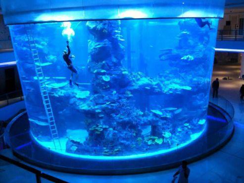 Morocco Mall : Les poissons du plus grand aquarium du Maroc morts suite à une « erreur professionnelle »?
