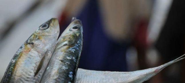 Changement climatique : Les vents resteront-ils favorables à la pêche ?