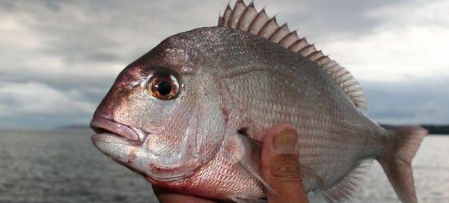 Produits de pêche: L'intoxication par la ciguatera augmente en Méditerranée