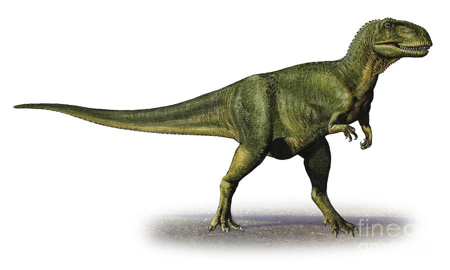 Un fossile d couvert au maroc permet de d terminer la - Dinosaure marin carnivore ...