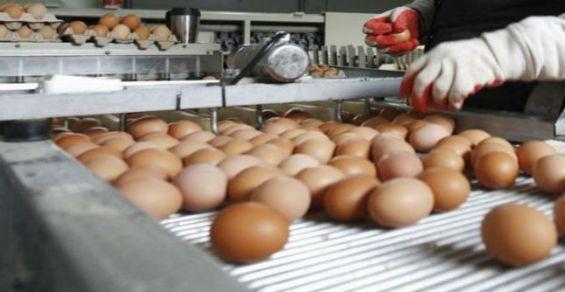 Une consommation moyenne de 185 œufs par habitant en 2018 — Maroc