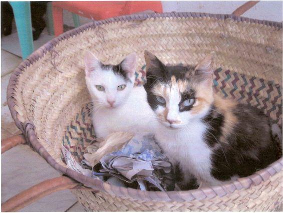 Belgique: alerte aux chats enragés en provenance du Maroc