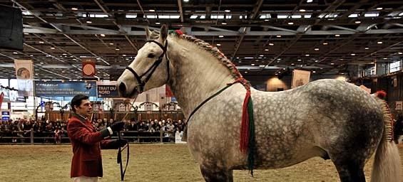 Paris les chevaux de mohammed vi au salon de l agriculture - Prix entree salon de l agriculture ...