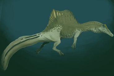 Maroc : Une nouvelle preuve confirmant le mode de vie aquatique du Spinosaurus