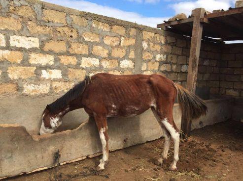 Un autre cheval du « Haras Al Doum ». / Ph. Page Facebook « Chevalitude »