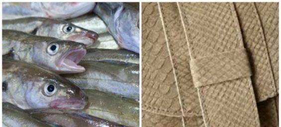 SaeSkin : La maroquinerie de luxe en peau de poisson