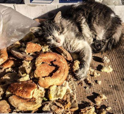 Un chat dans la médina de Casablanca. / Ph. Yagazie Emezi