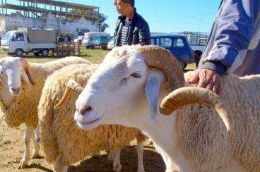 Maroc : L'Aïd Al Adha sera célébré le mercredi 22 août