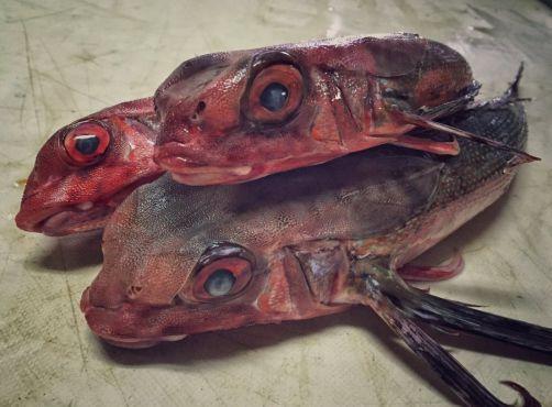 D'autres poissons trouvés en eaux marocaines. / Ph. @rfedortsov