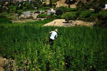 Maroc : «La prohibition de l'usage récréatif et thérapeutique du cannabis est un échec total»