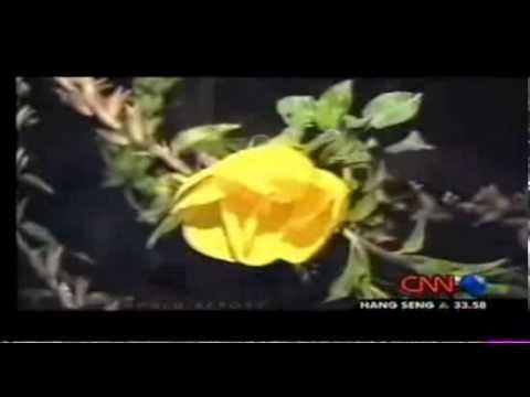 Fleur Qui S Ouvre A L Appel De L Adhan Cnn