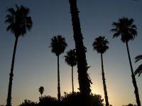 La palmeraie au coucher du soleil alt=