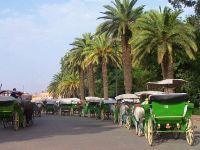 Les calèches de Marrakech alt=