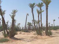 La palmeraie de Marrakecj alt=