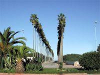 Avenue des Palmiers alt=