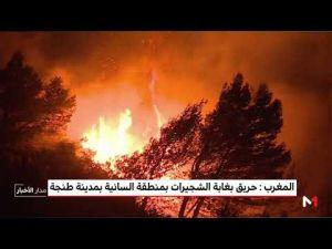 نشوب حريق بغابة الشجيرات شرق مدينة طنجة