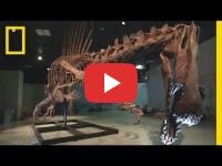 Fossils of a Spinosaurus aegypticus probably found in Morocco is allegedly for sale on Facebook