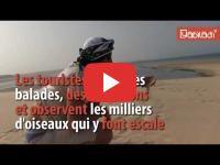 Nomad #50 : La dune Blanche, petit paradis de kite-surfers à Dakhla, en danger