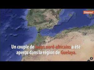 Des loups nord-africains près de Nador ?