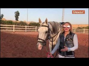Diaspo #106 : Houda Kabdani a suivi son amour pour les chevaux jusqu'en Arabie saoudite