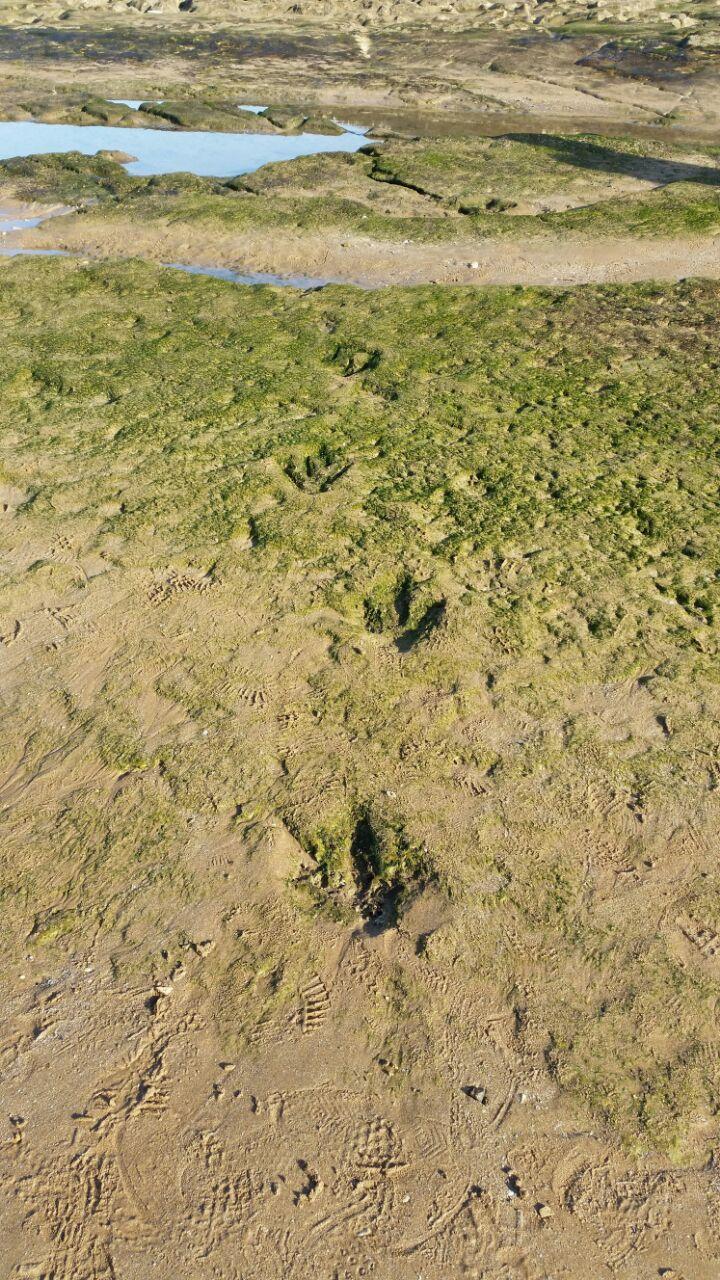 Une montée brusque de la mer a nettoyé la plage, c'est ce qui a permis de dévoiler le maximum d'empreintes sur la plage d'Anza. / Ph. Moussa Masrour