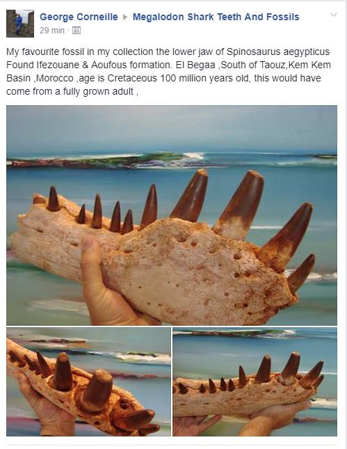 Fossils of a Spinosaurus aegypticus probably found in
