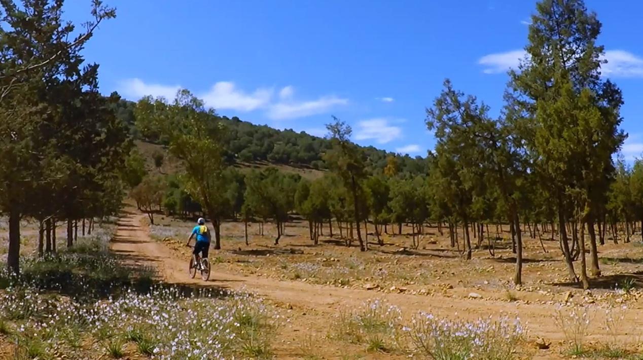 Le parc de Sidi Maafa./Ph.DR