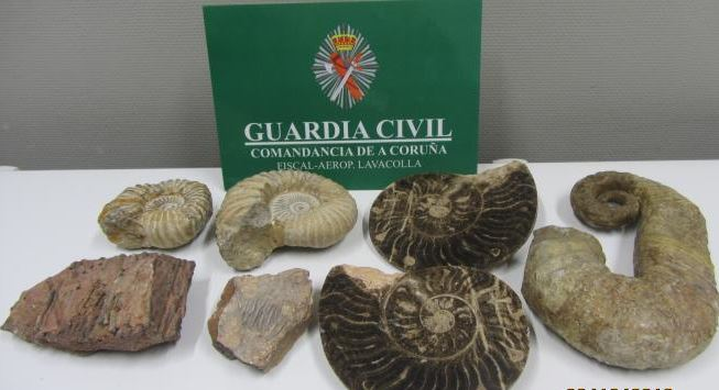 Les fossiles marocains saisis par la police espagnole. | DR