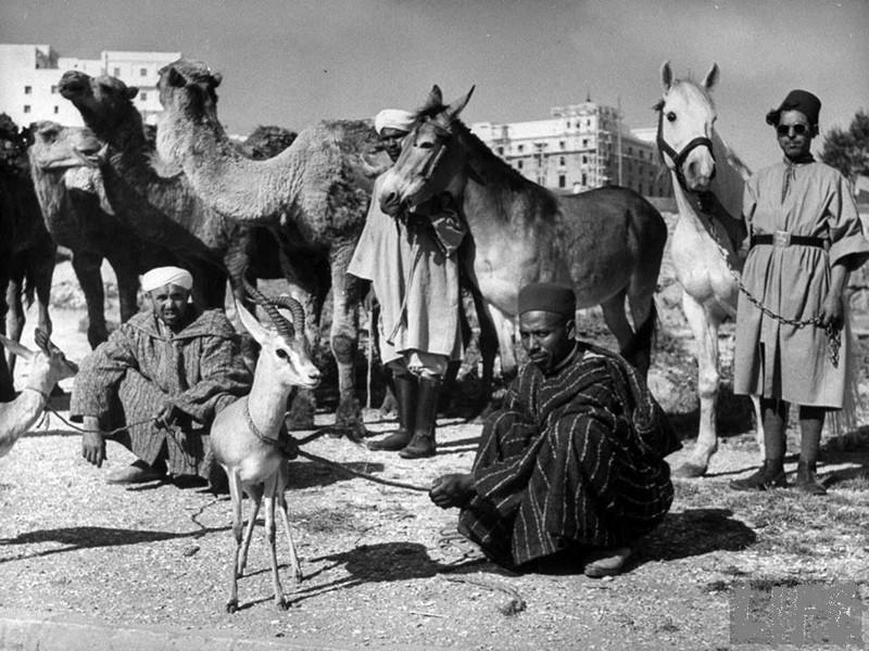 marche-maroc-epoque