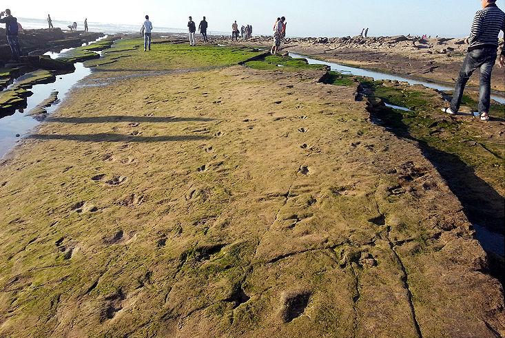 Le meilleur moment pour voir les empreintes de dinosaures, c'est lors de la marée basse. / Ph. Moussa Masrour